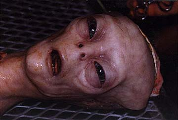 http://alien-ufo-research.com/images/alien/dead_alien_picture_10.jpg