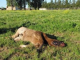 Horse Mutilation UFO