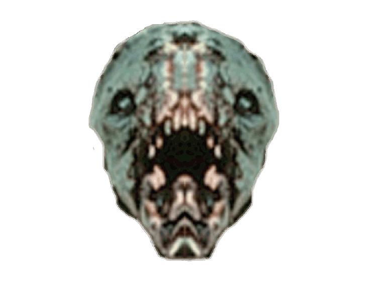 Chupacabra Skull